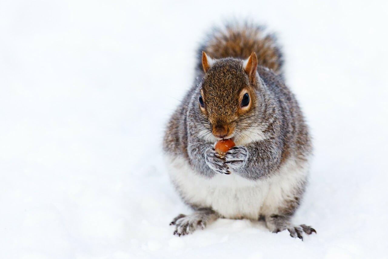 Diy Squirrel Control Critter Busters Acworth Ga