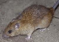 rat removal acworth ga