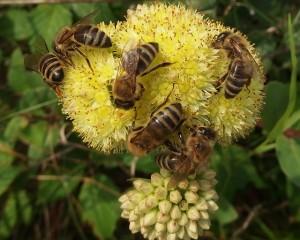 Bee Removal Canton, GA